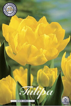 """Double Early Tulips  """"Monte Carlo"""""""