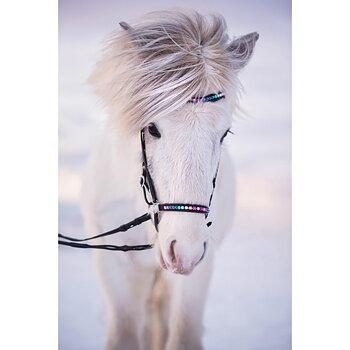 Nordic Horse Huvudlag Rainbow