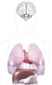 Internal Organs Target Visible 10pcs