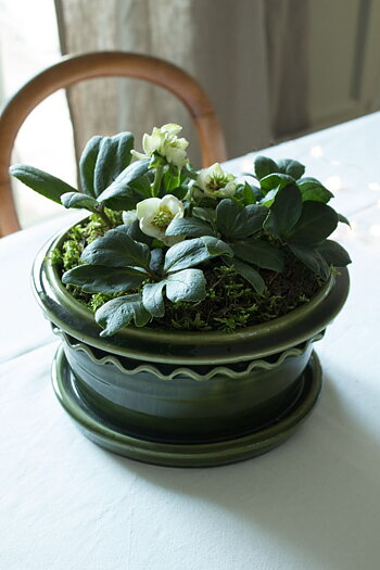 Plant Bowl Dark Green 18cm