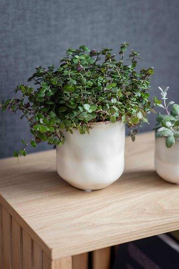 Garden Trading Westbury Pot Beige