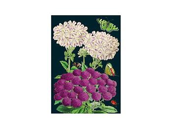 Madame Treacle : Purples - Kort med kuvert