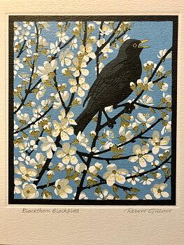 Robert Gillmor : Blackthorn blackbird - Kort med kuvert
