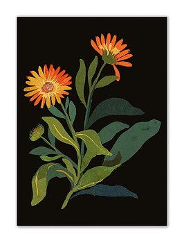 Delany Flowers : Ringblomma - Skrivhäfte linjerat Mini med färgat snitt
