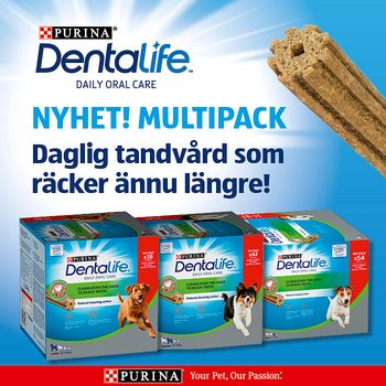 DentaLife Multipack