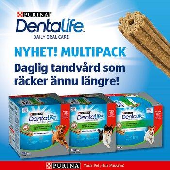 DentaLife Multipack