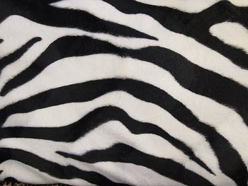 Zebra Sammet