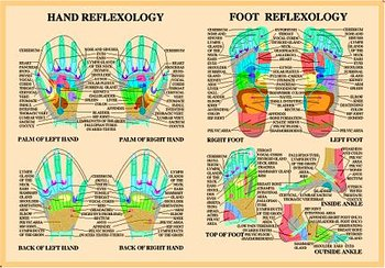 Hand and Foot Reflexology Chart, plansch A2