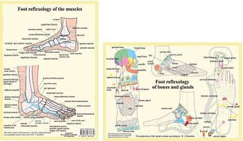 Foot reflexology of bones, glands and muscles, plansch A4