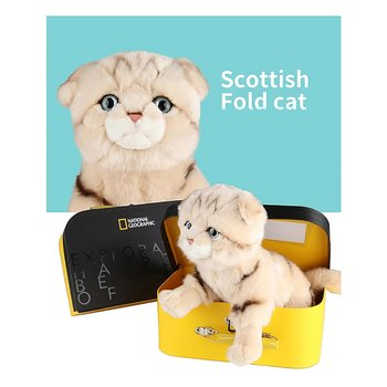 National Geographic Kids: Scottish Fold