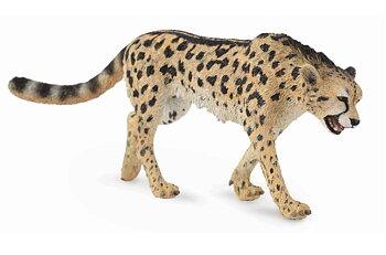 Kung gepard (King Cheetah)