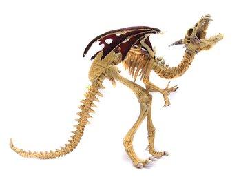 Skelett Drake