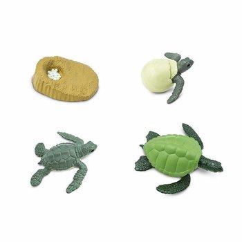 Livscykel av Grön havssköldpadda Safariology®
