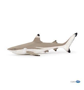Svartfenad revhaj (Blacktip reef shark)