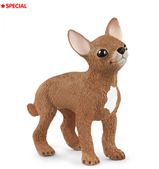 Chihuahua - User Voted Animal 2020