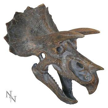 Triceratops skalle