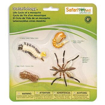 Livscykel av en mygga Safariology®