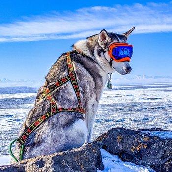 Howling Dog Alaska  Standardsele röd