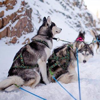 Howling Dog Alaska  Standardsele grön