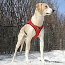 Howling Dog Alaska Second Skin sele röd