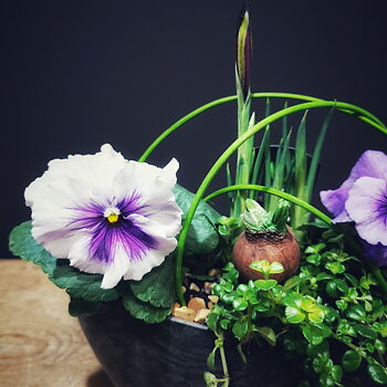 Vårens växtkraft